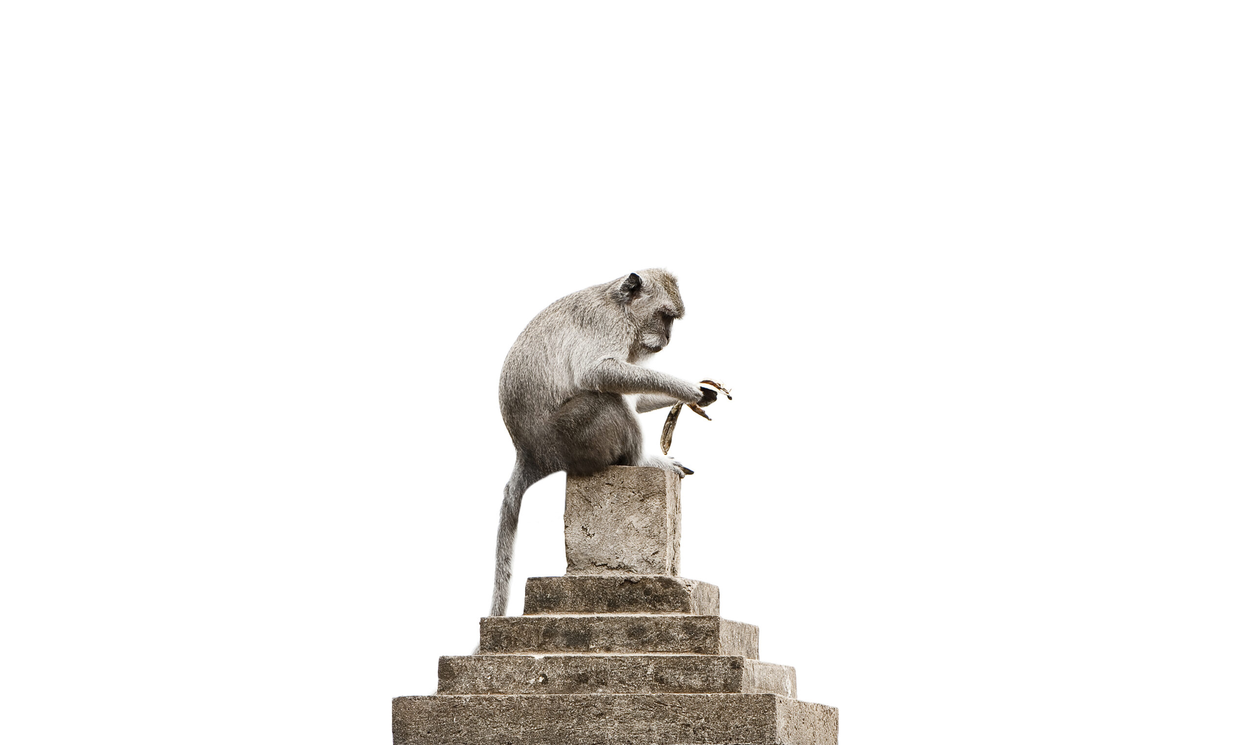 Uluwatu Monkey Dilemma