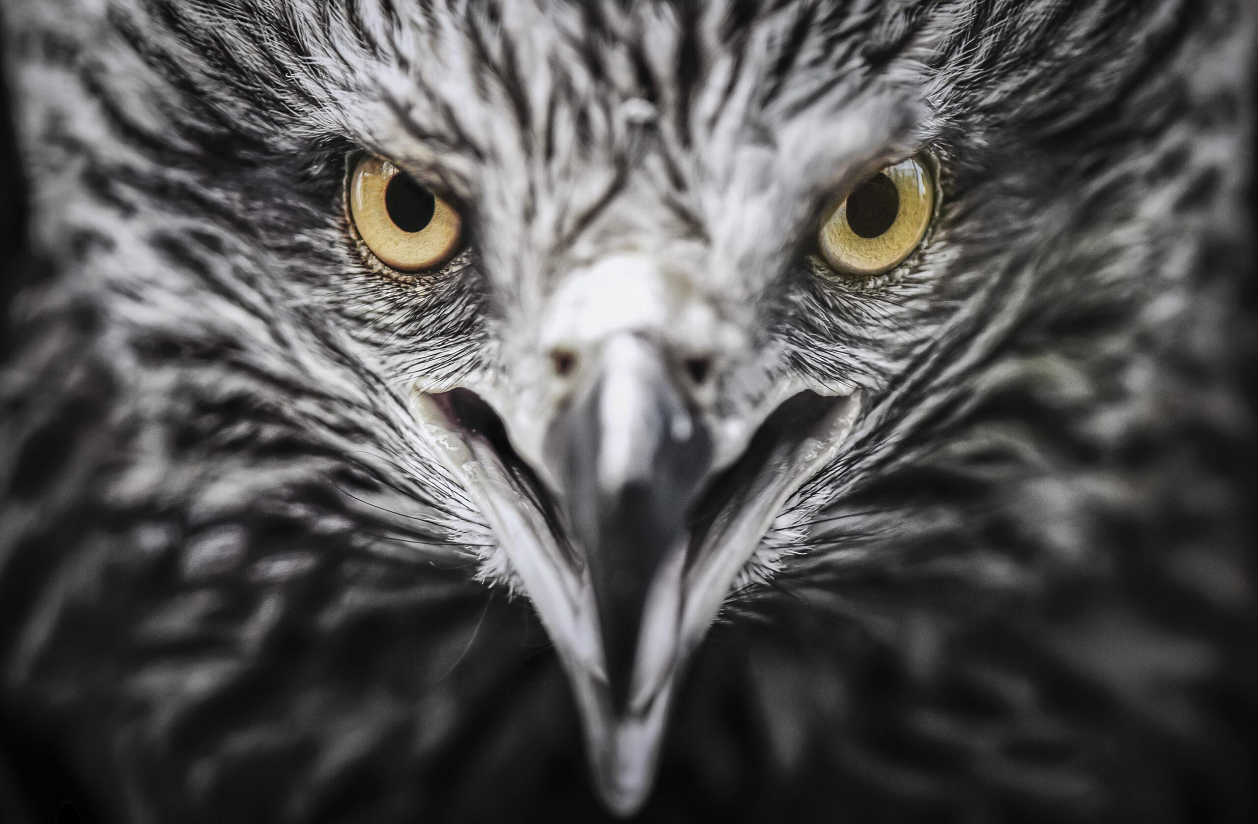 Eyes of a kite