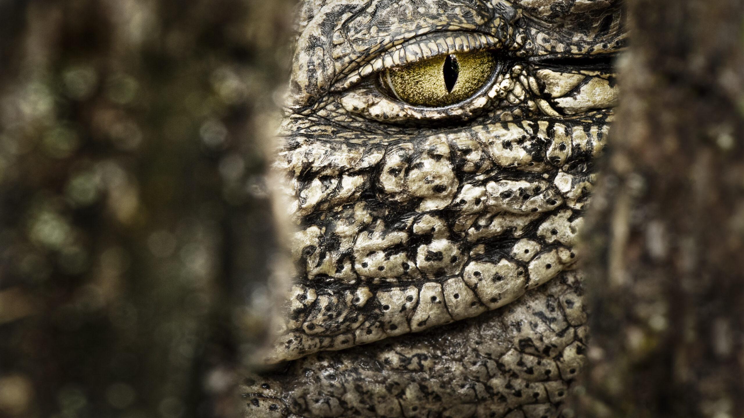 Crocodile's ambush